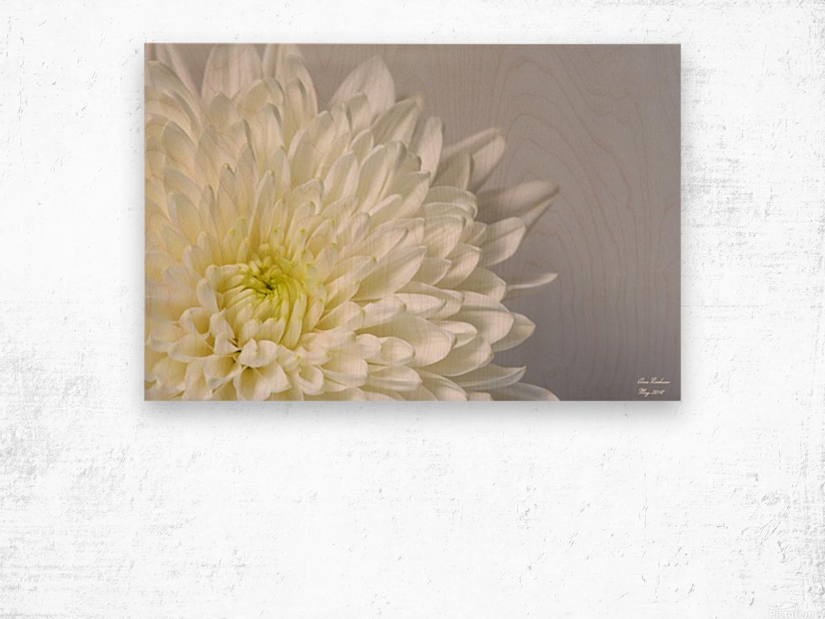 White Mum Flower Crystalfind Canvas