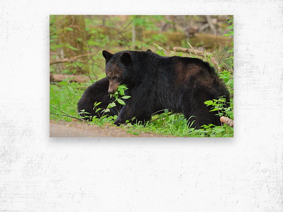 3415-Meal Break Wood print