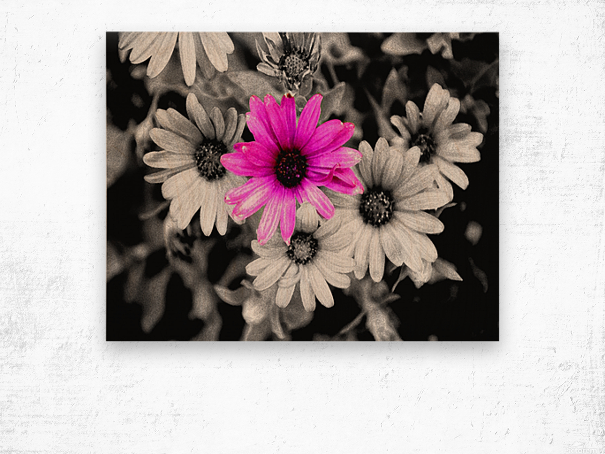 One Colored Daisy Wood print