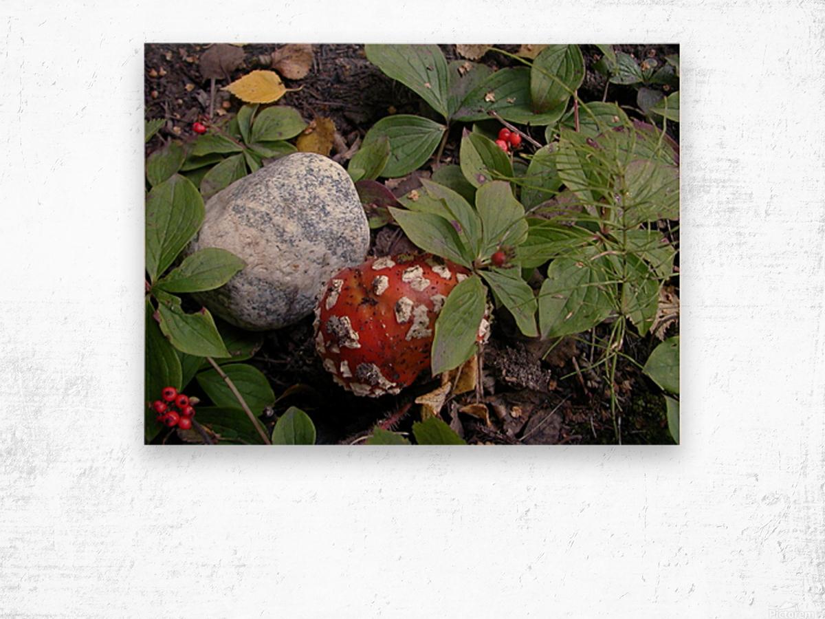 Red Mushroom & Rock Wood print