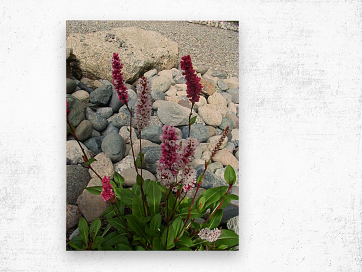 Red Flowers in Rocks Wood print