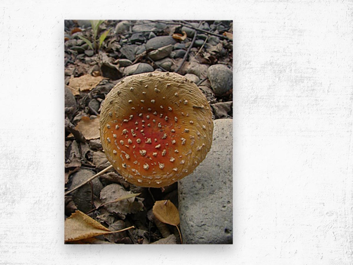 Red Mushroom Wood print