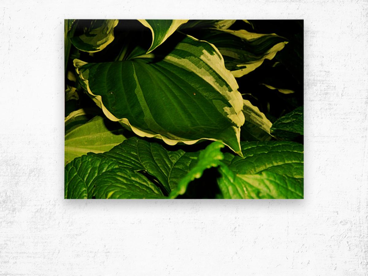 C (9) Wood print