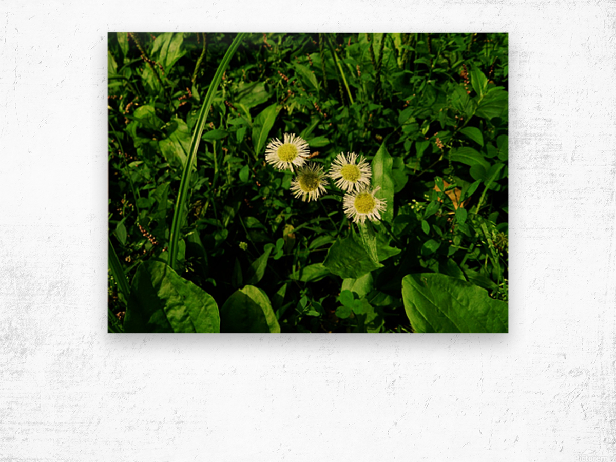 sofn-D38C2562 Wood print