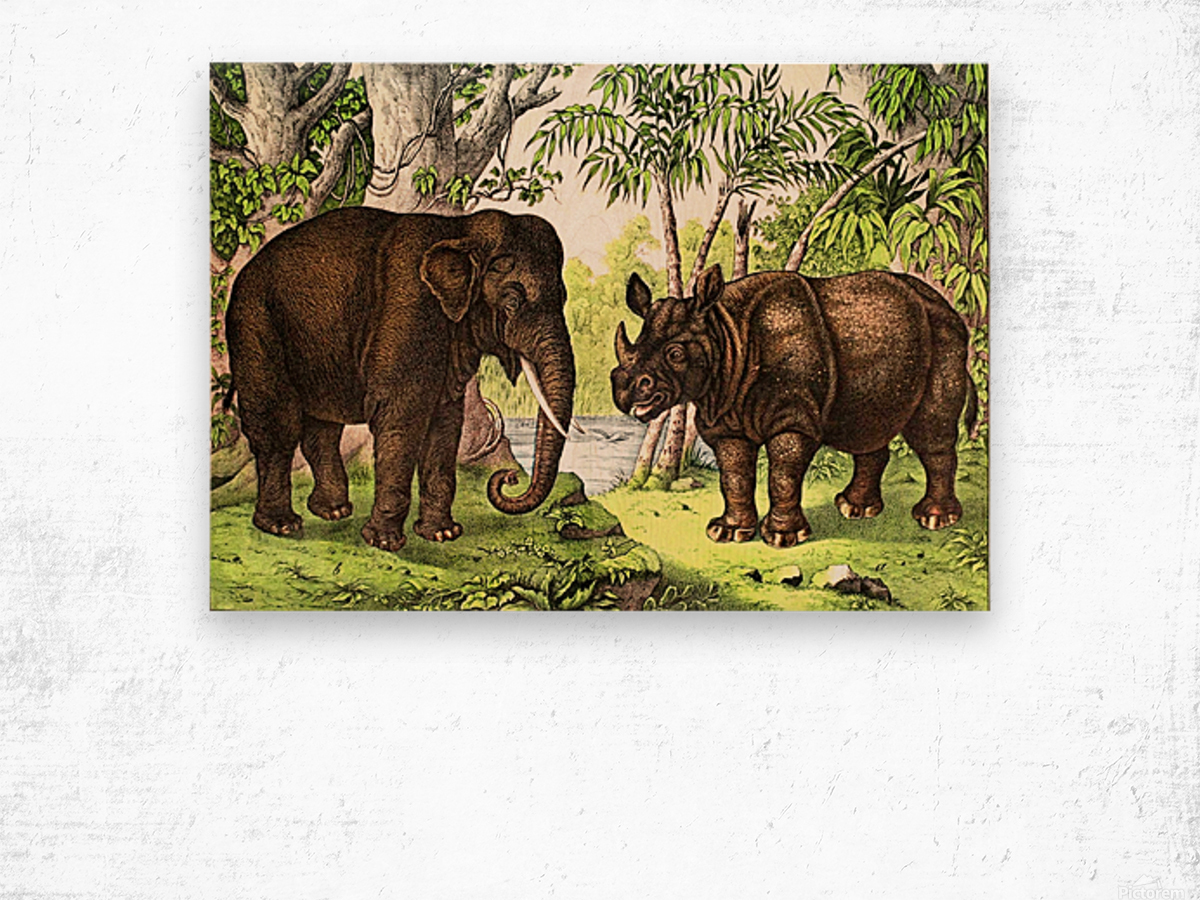 Elephant And Rhinoceros Wood print