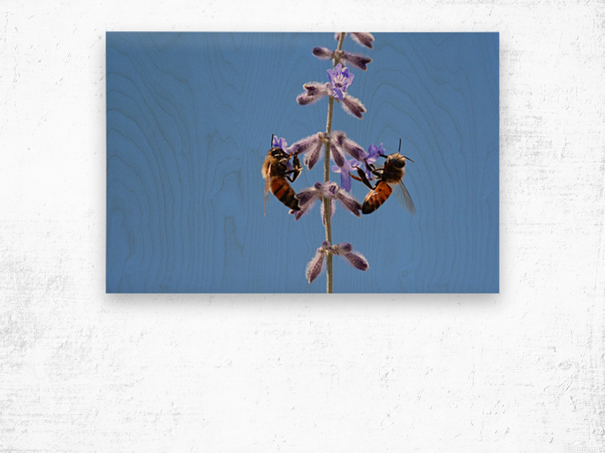 Two Bees On Vine Photograph Wood print