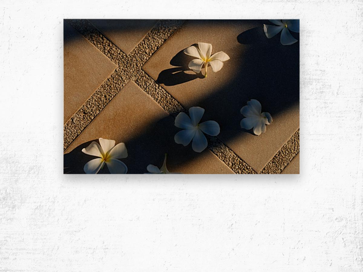 Plumeria flower on floor Wood print