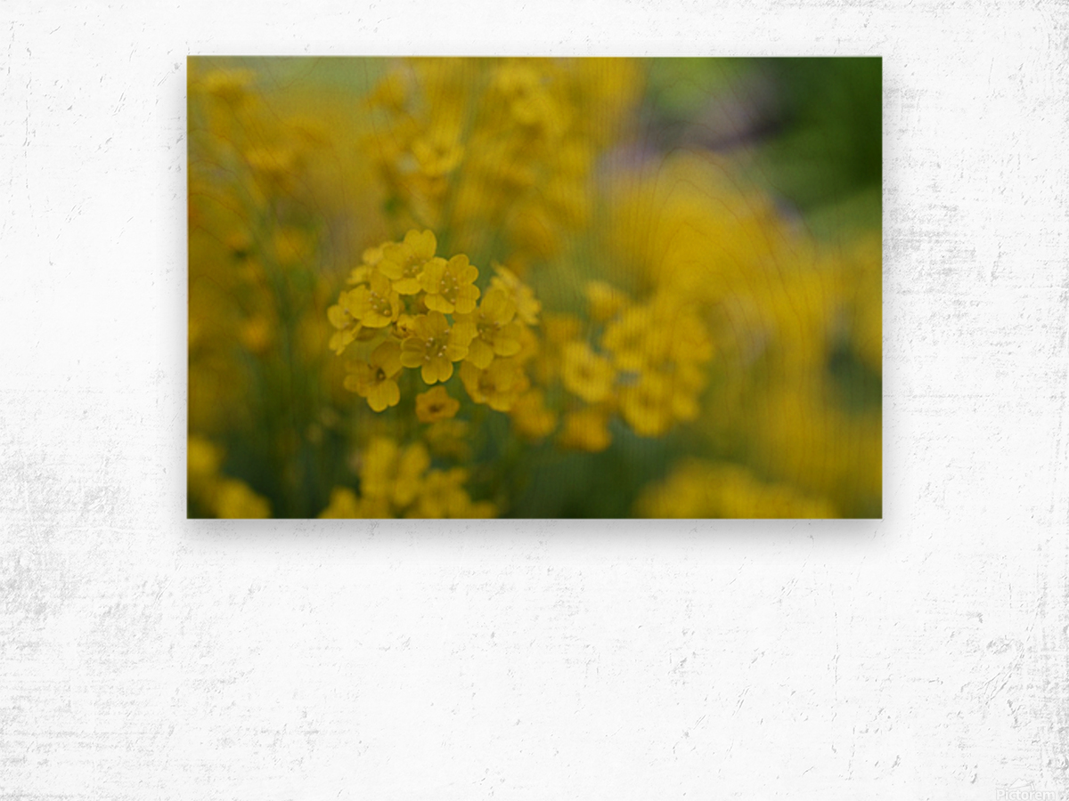 Small Yellow Flowers Photograph Katherine Lindsey Photography Canvas