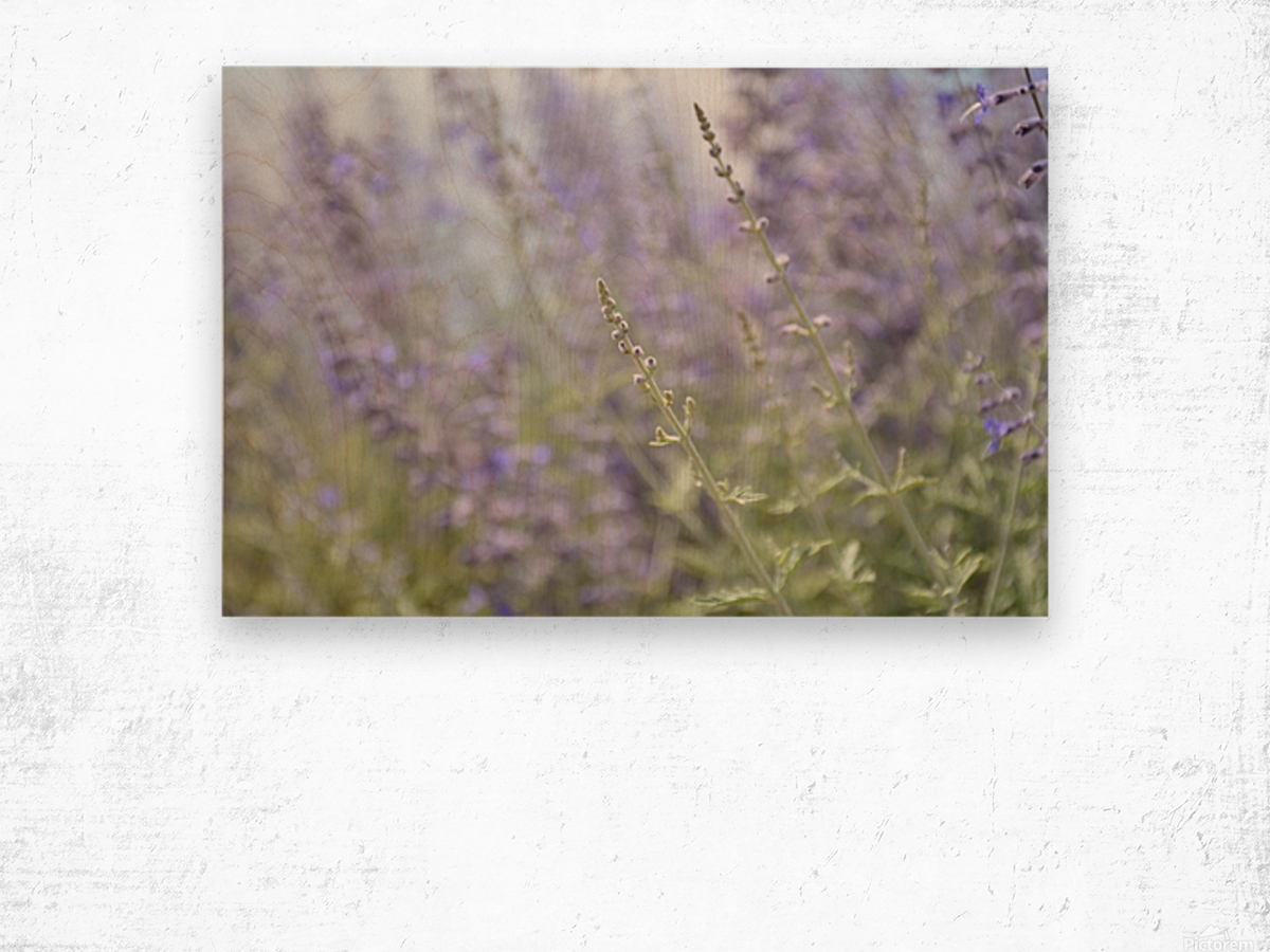 Soft Blue Spring Blossoms Photograph Wood print