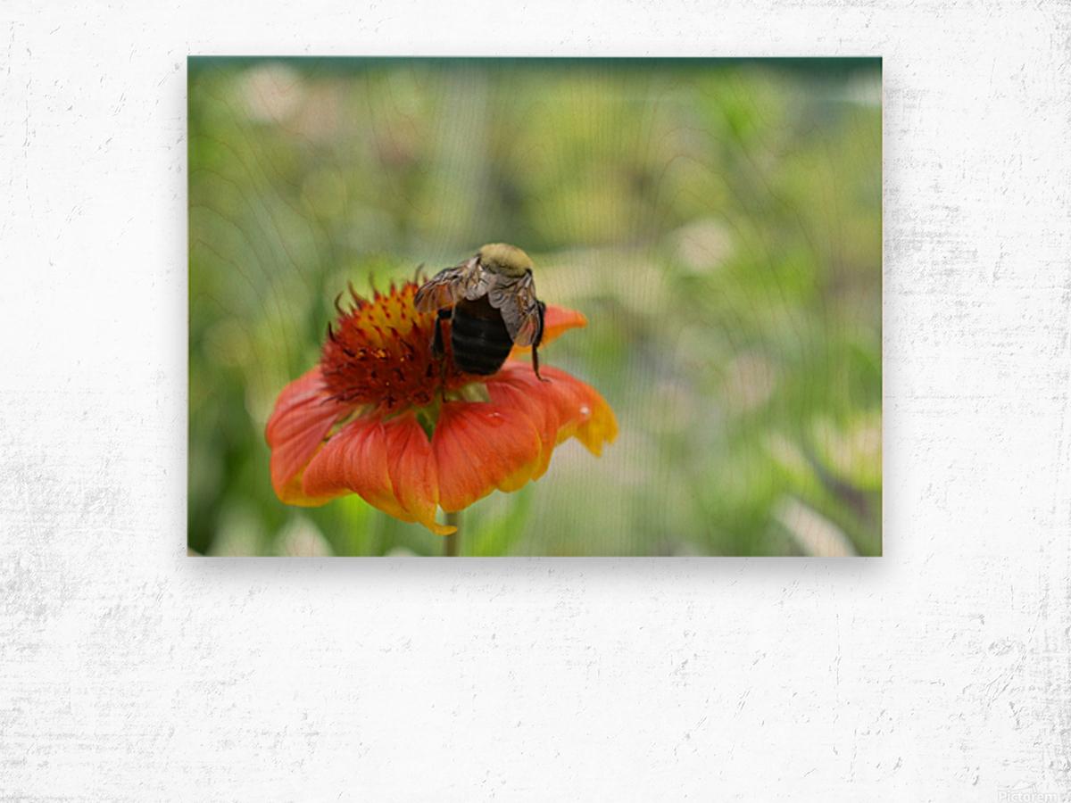 Bee On Orange Flower Photograph Wood print