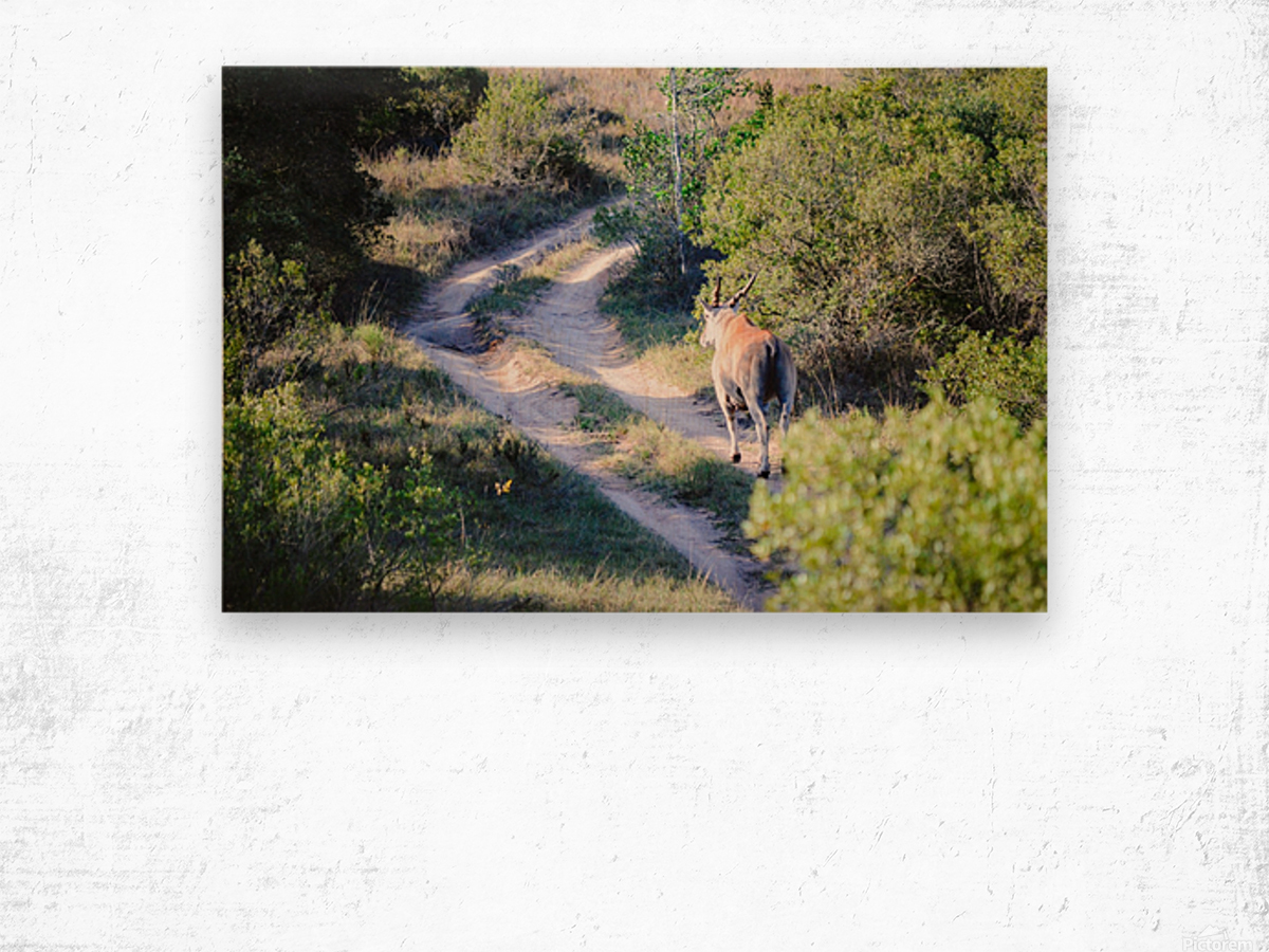 A Deer on the Path Wood print