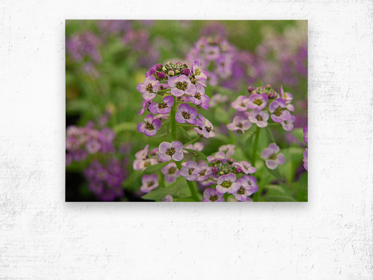 Small Purple Flowers Photograph Katherine Lindsey Photography Canvas