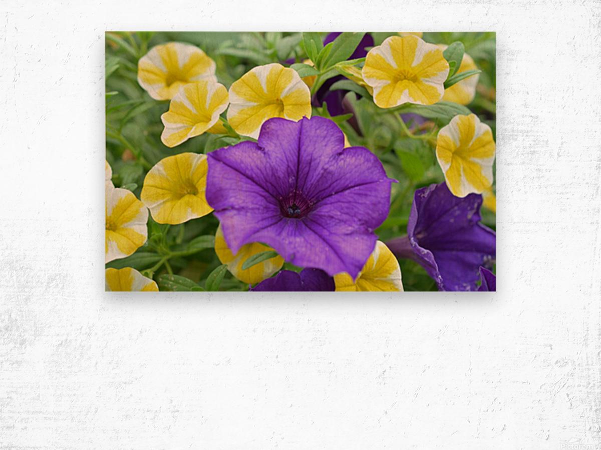 Beautiful Blue Flower In Yellow Flower Garden Photograph Wood print