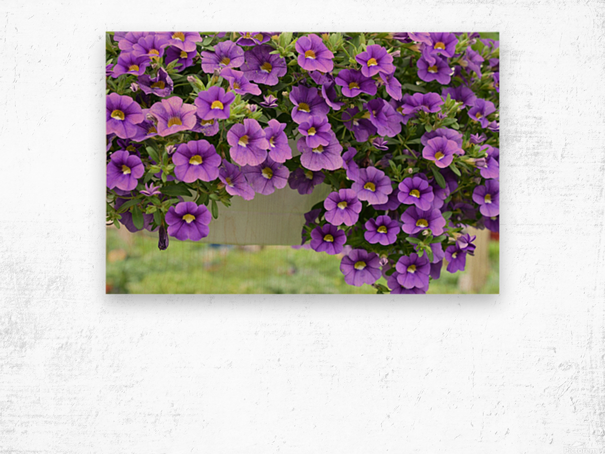 Beautiful Purple Flowers Photograph Wood print