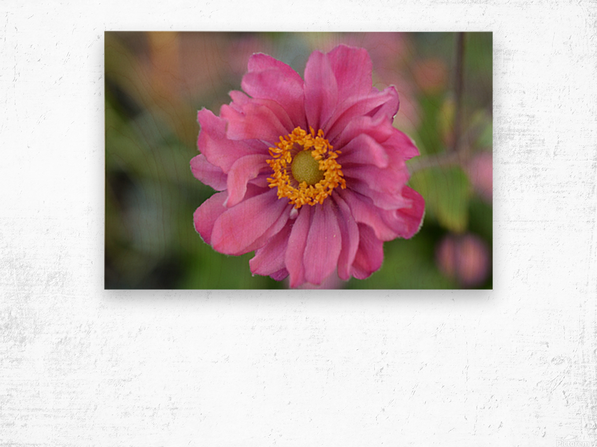 Pink Flower Photography Wood print