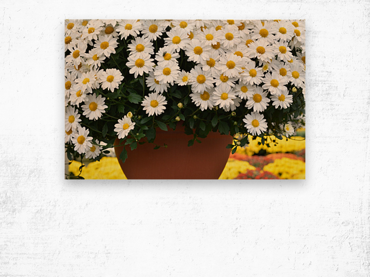 Beautiful White Flowers In A Hanging Basket Photograph Wood print