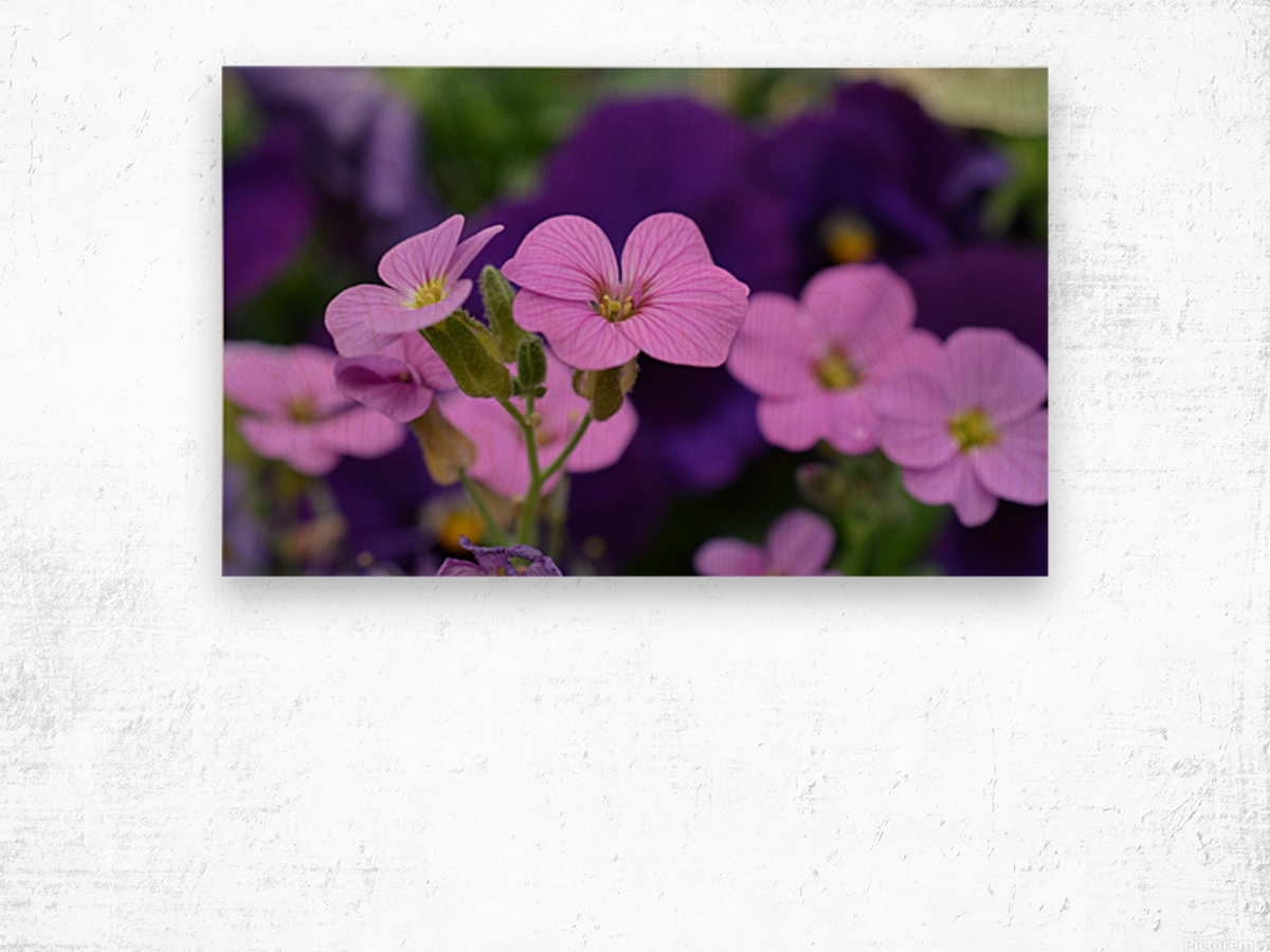 Beautiful Pink Flowers Photograph Katherine Lindsey Photography Canvas