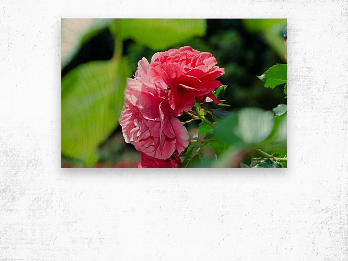 Rose Name Wood print