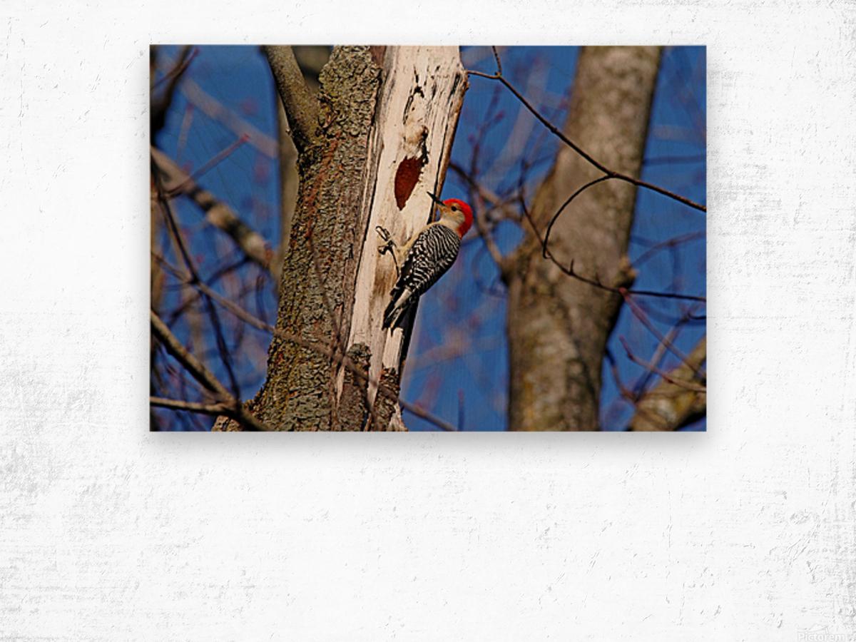 Red Bellied Woodpecker Wood print