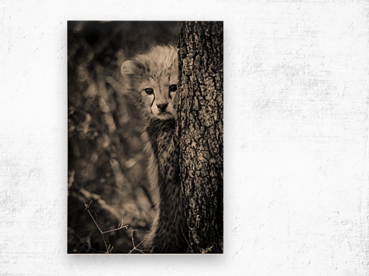 Shy but Curious Wood print
