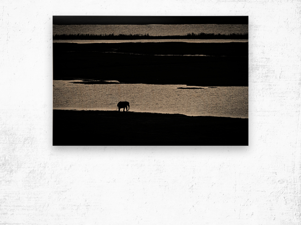 Chobe River Elephant Wood print
