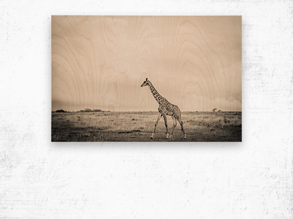 Zebrascape Wood print