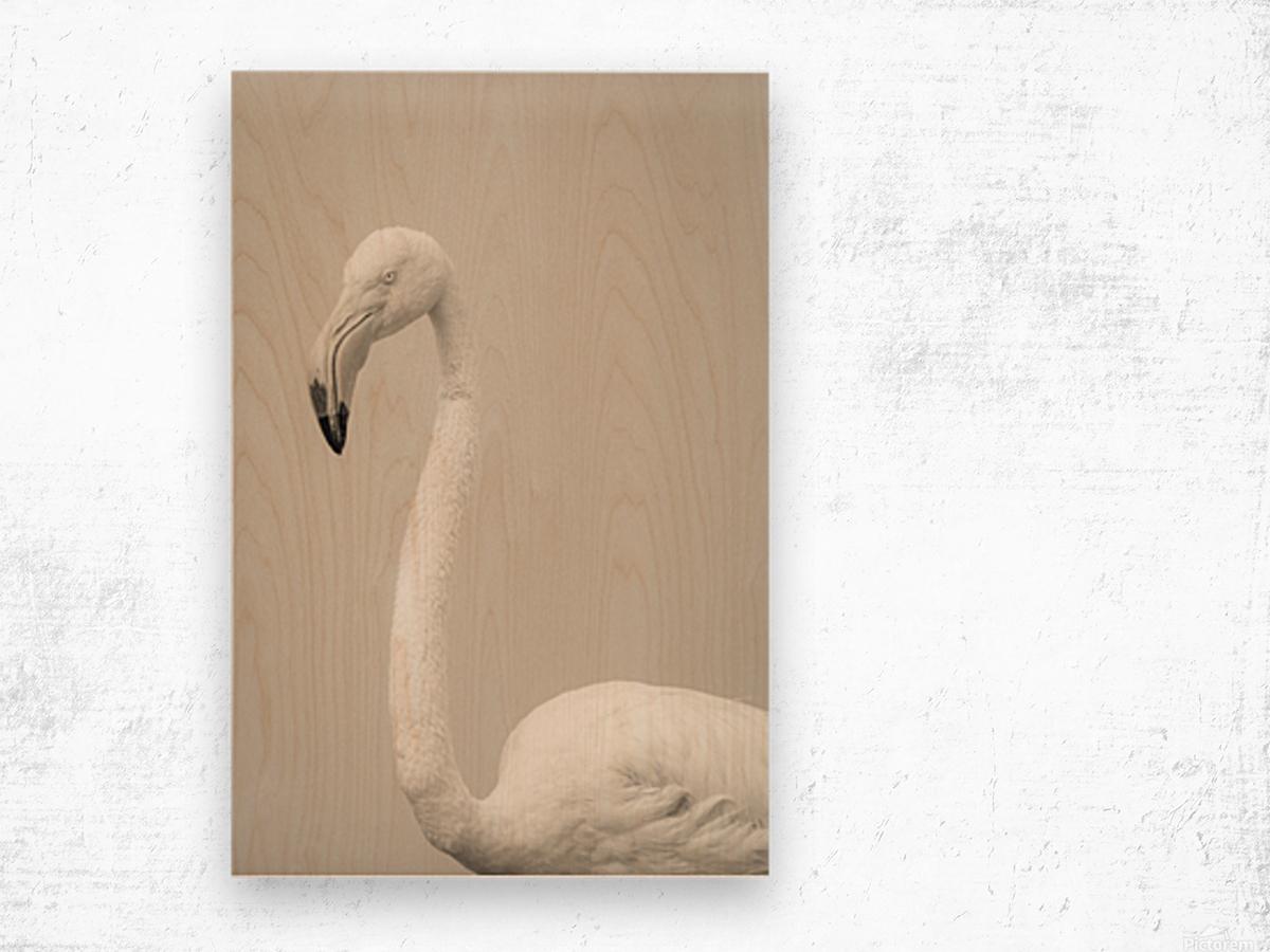 Fluffy Wood print