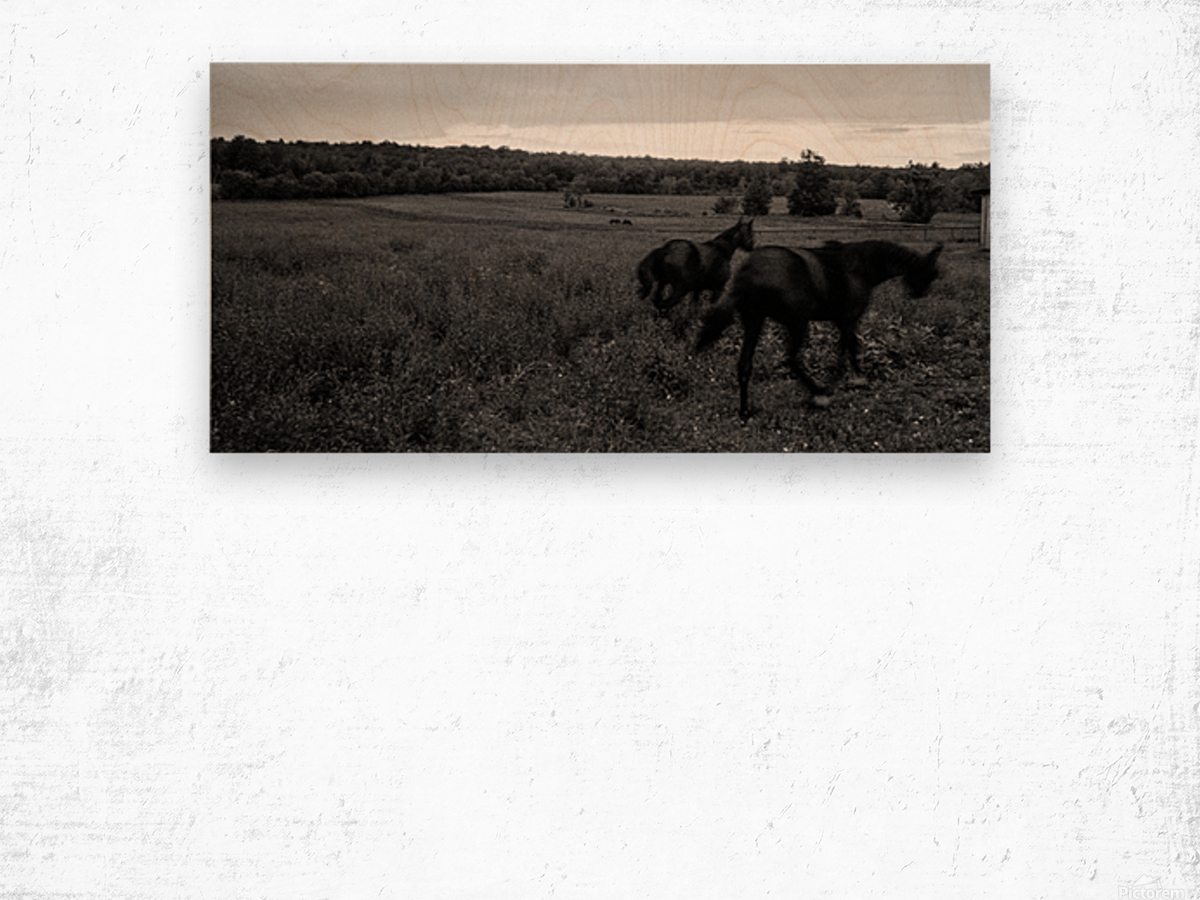 Horses in the Field Impression sur bois