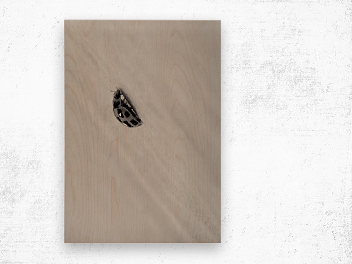 Nature 017 Wood print