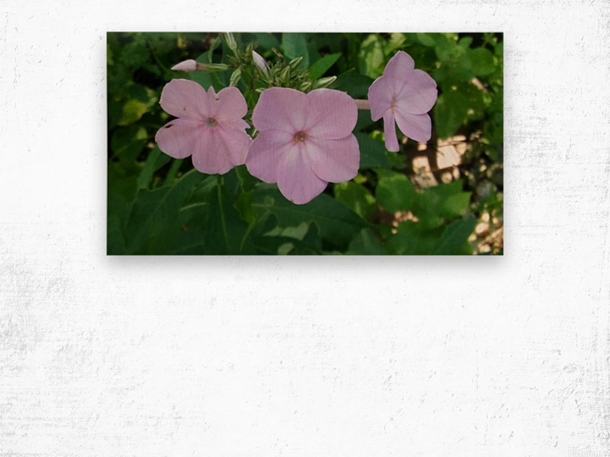Small Purple Flowers Wood print