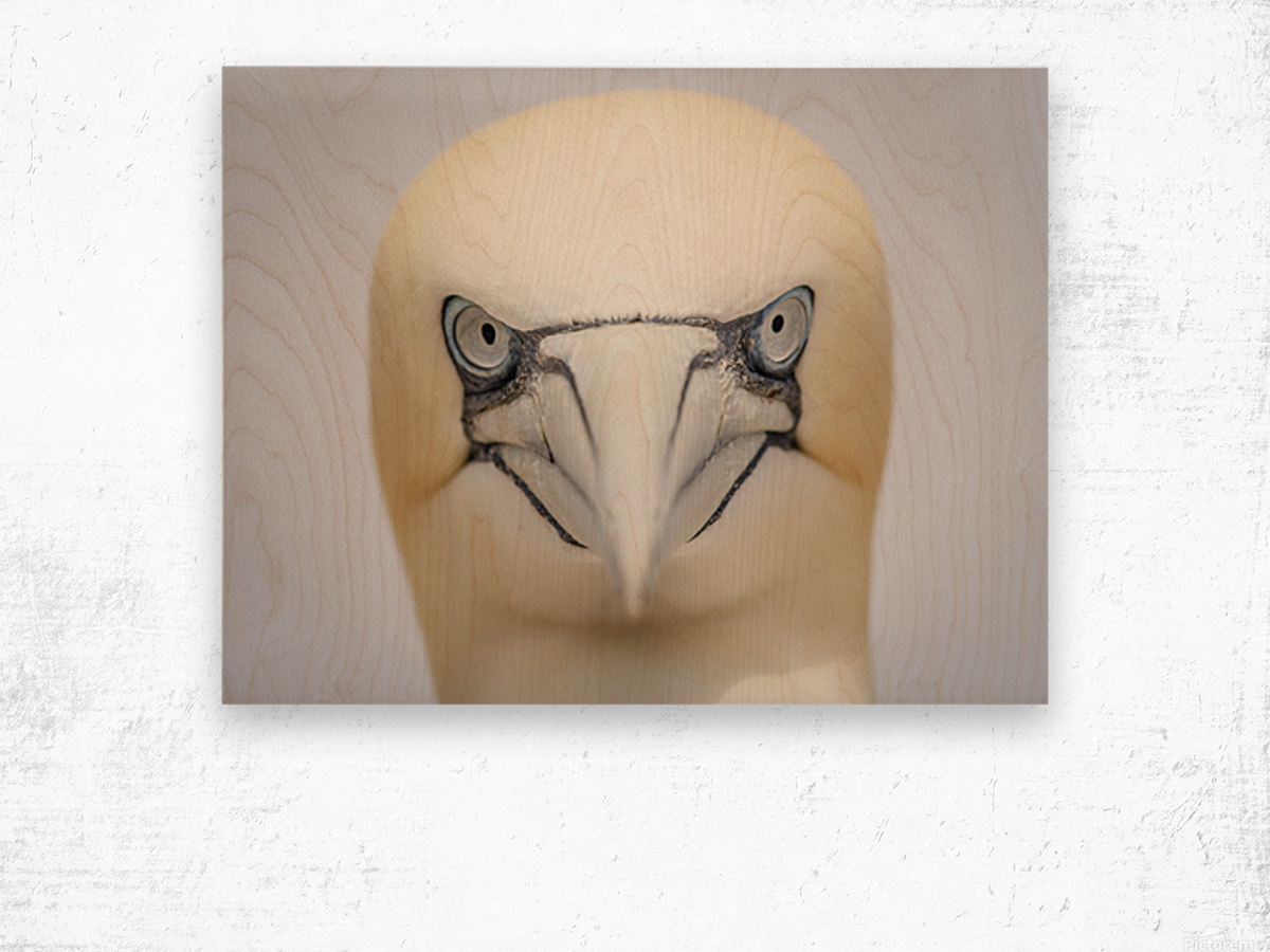 Angry Bird Wood print