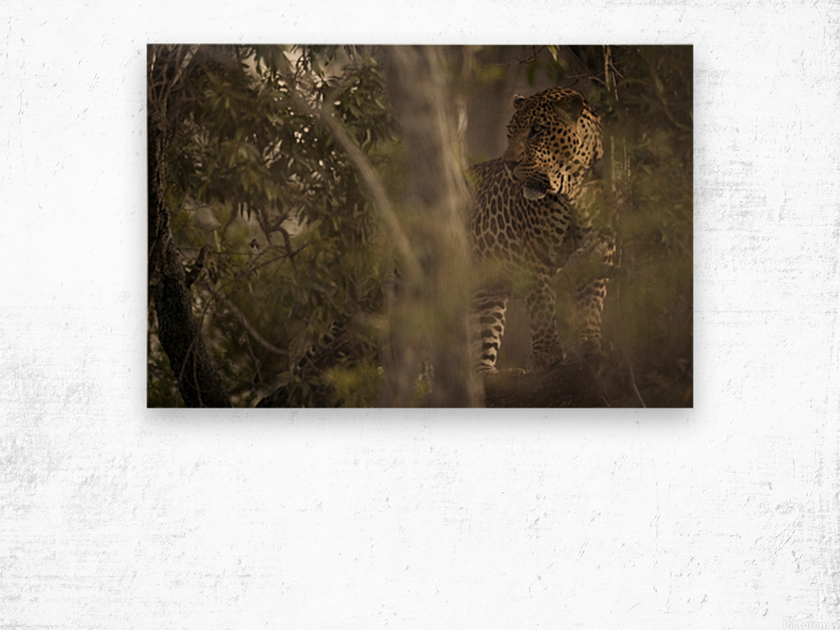 Ghosts of the Serengeti Wood print