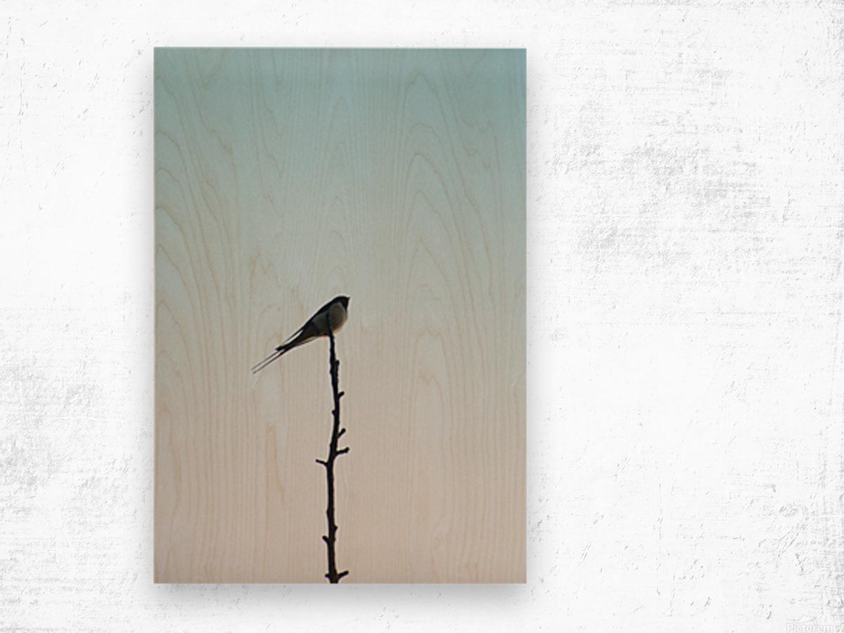 European Swallow Wood print