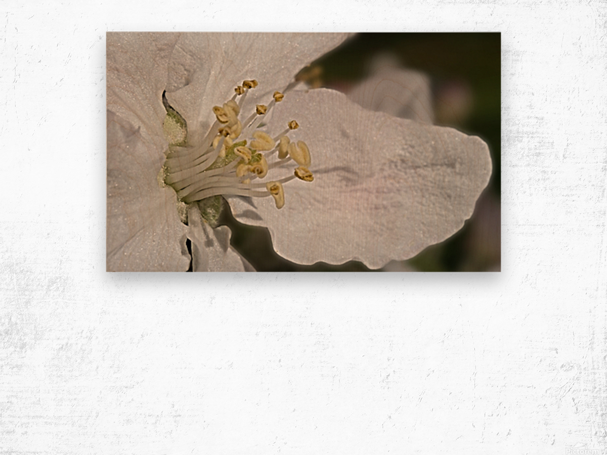 Fruit Blossom in close-up Wood print