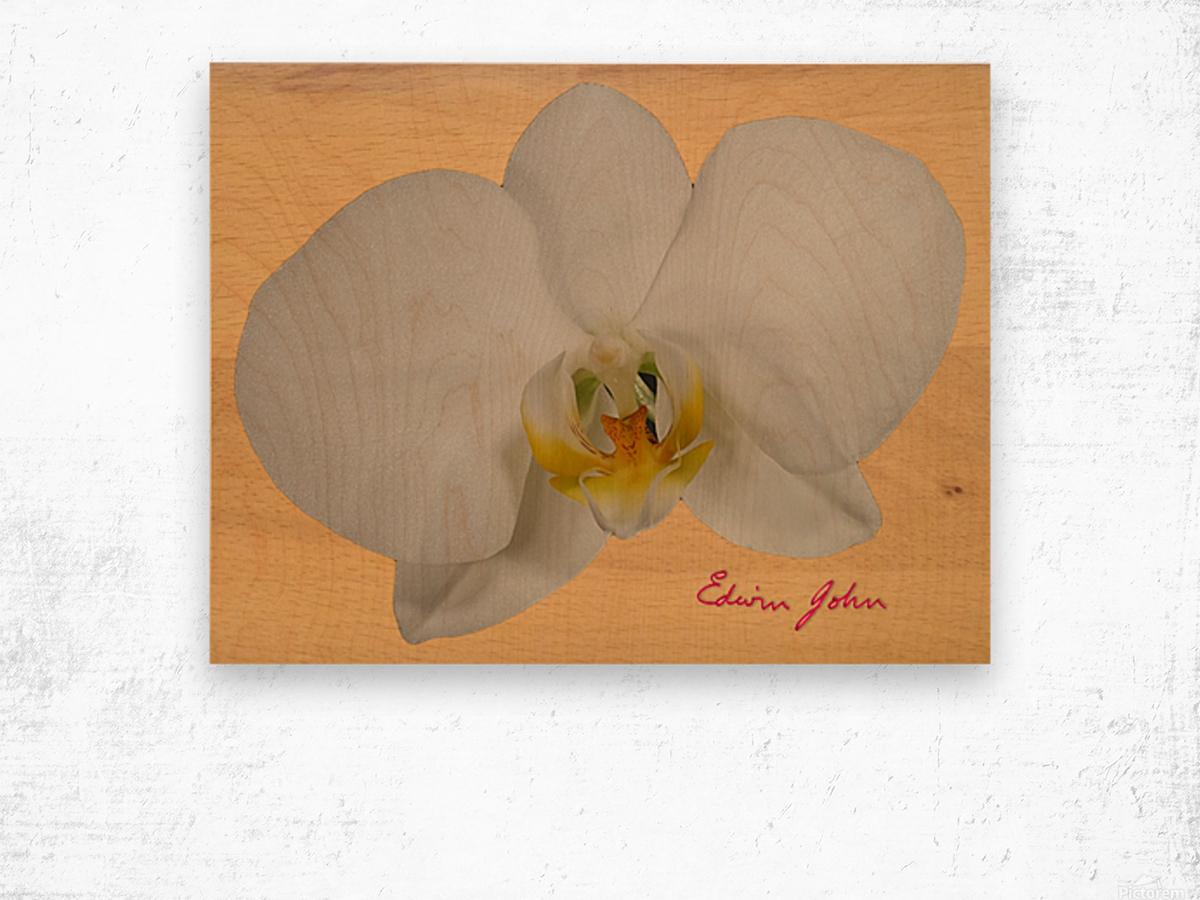 Moth Orchid Flower Single Flower White On Beech Wood Background