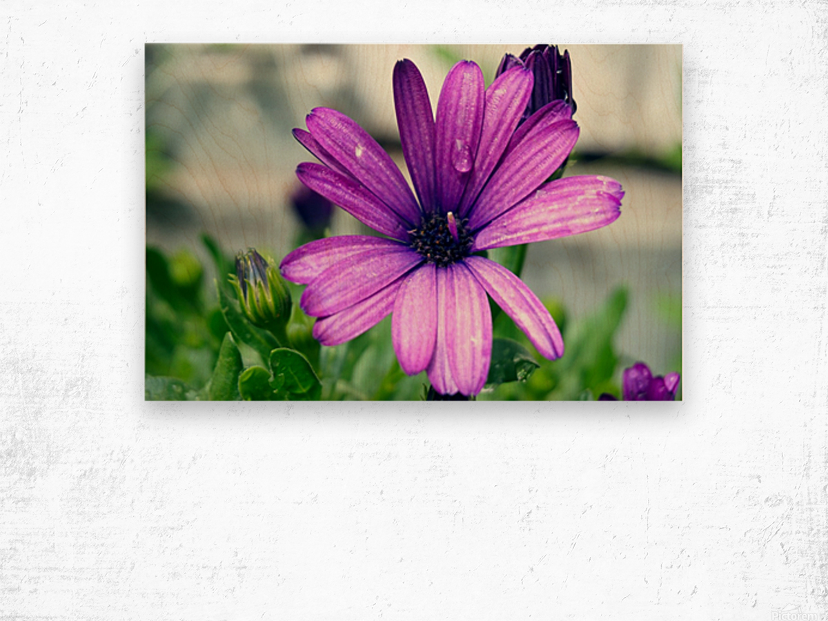 Waterdrop On Purple Flower Wood print