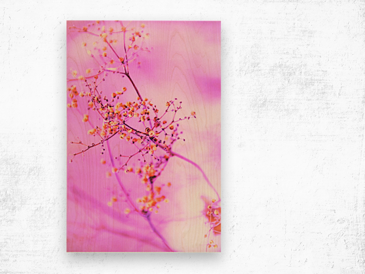 paint it pink  Wood print
