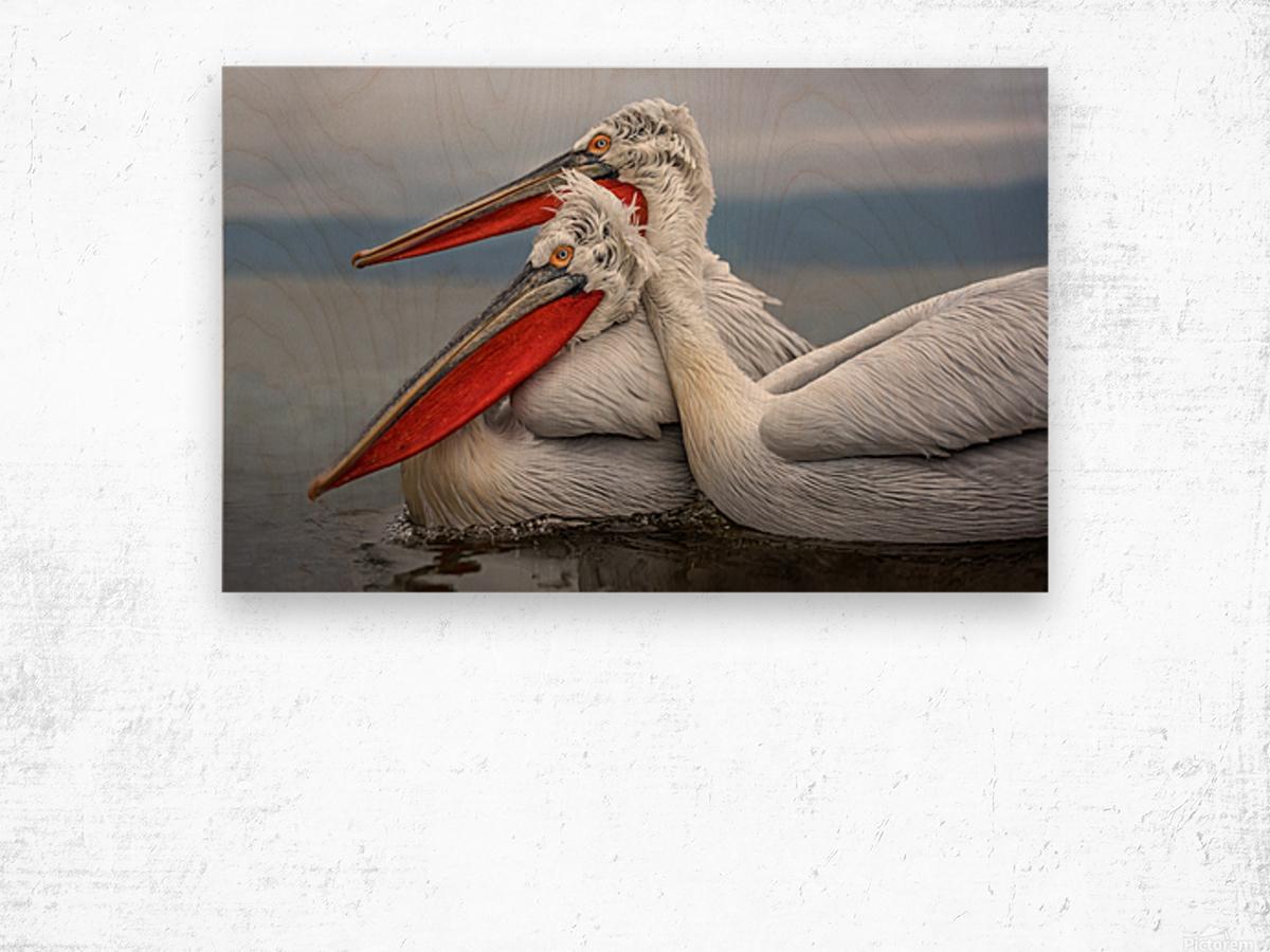 Dalmatian Pelicans Wood print