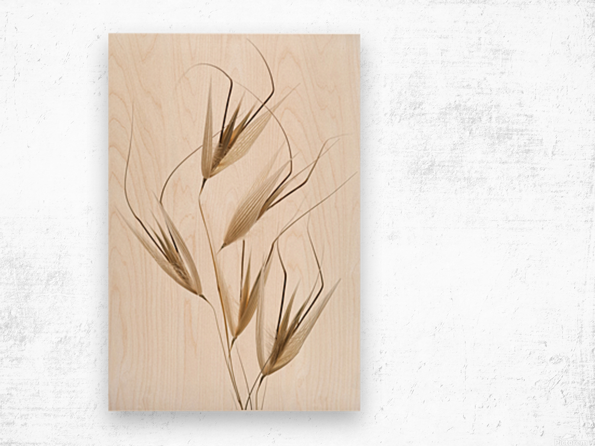 Delicacy of nature Wood print
