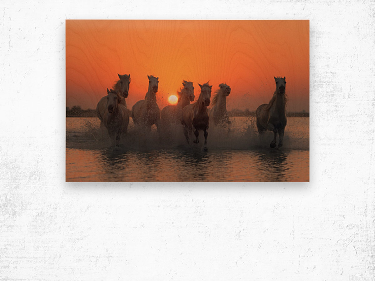 Sunset in Camargue Wood print