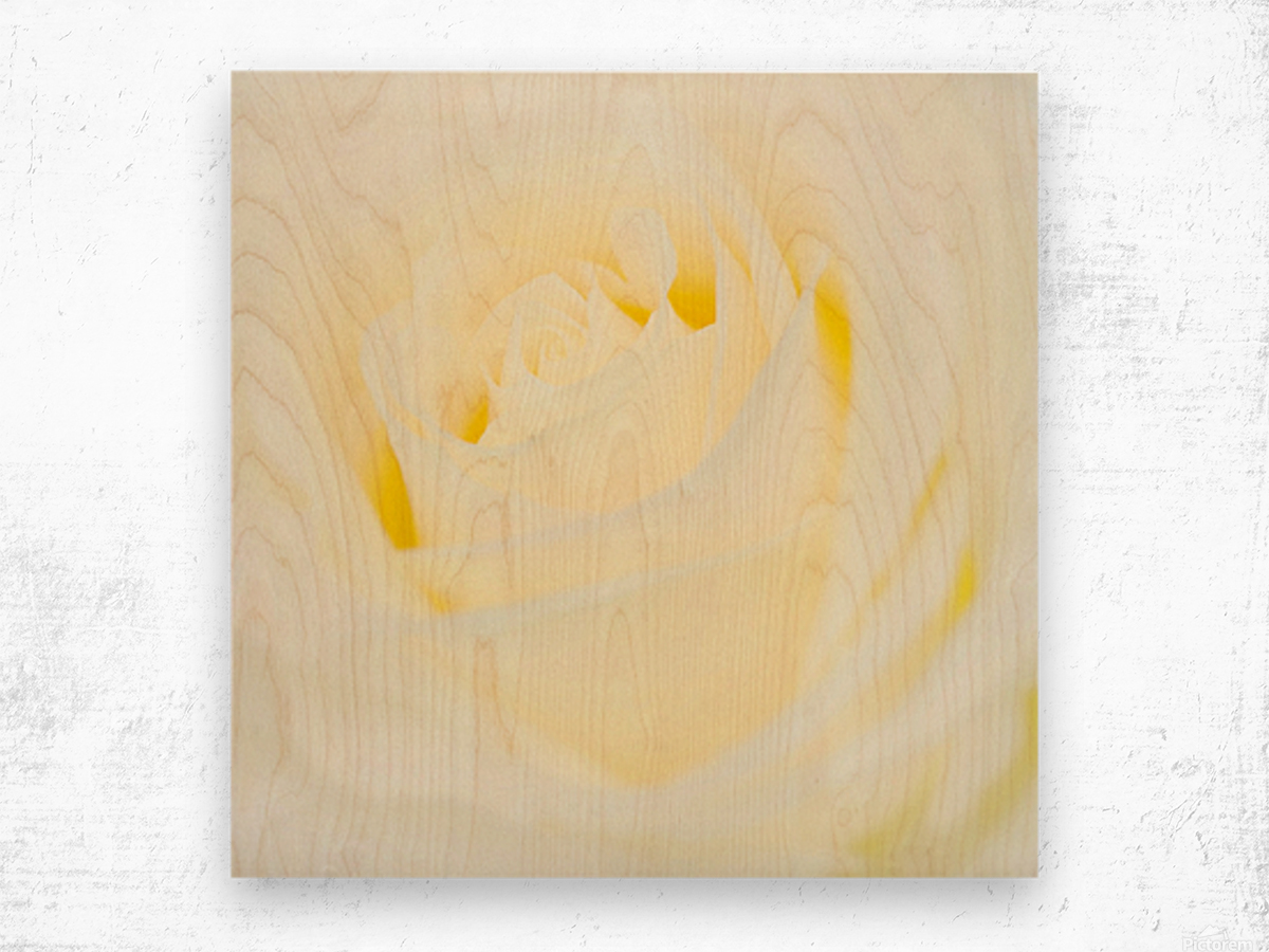 The White Rose Wood print