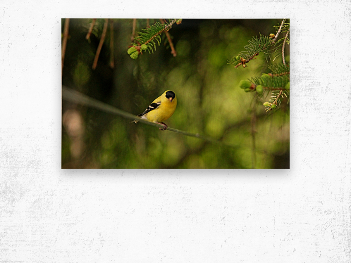 Goldfinch On The Disappearing Line Wood print