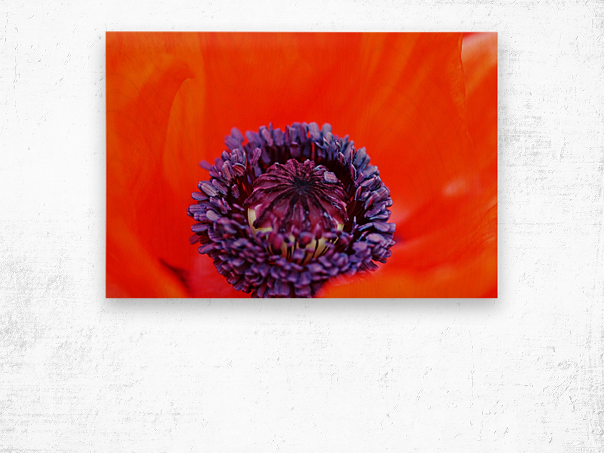 Poppy Whorl Wood print