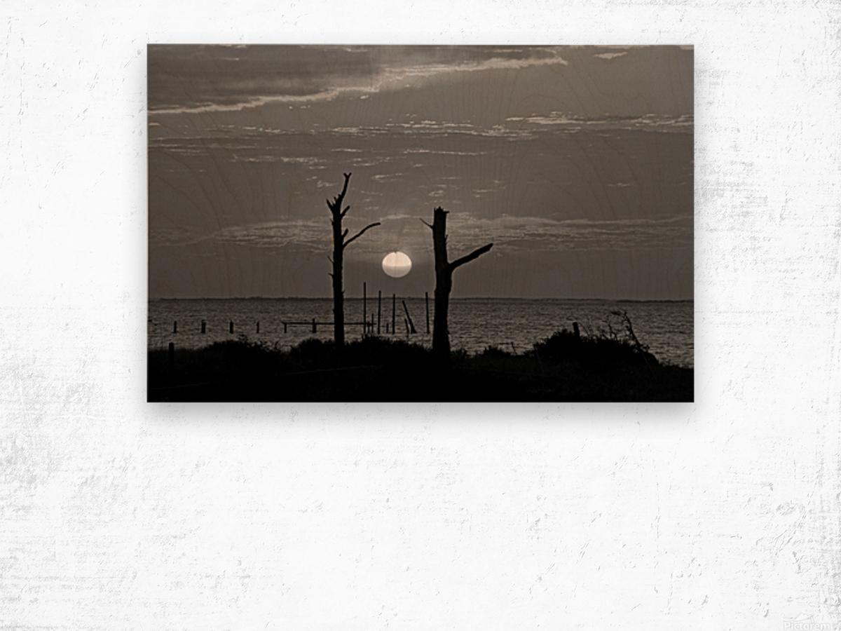 BW Two Tree Sunset Wood print