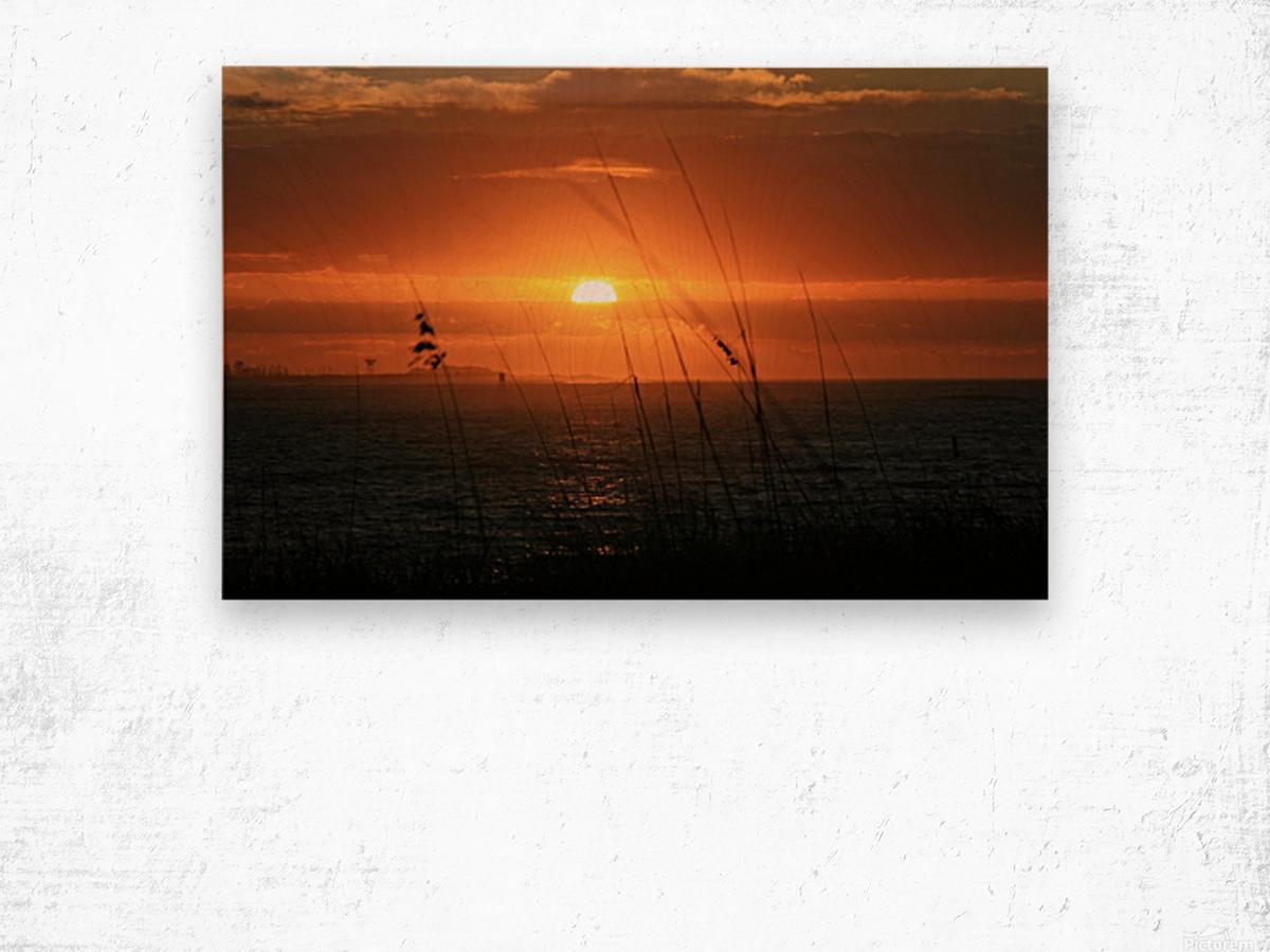 Sea Grass Sunset Wood print