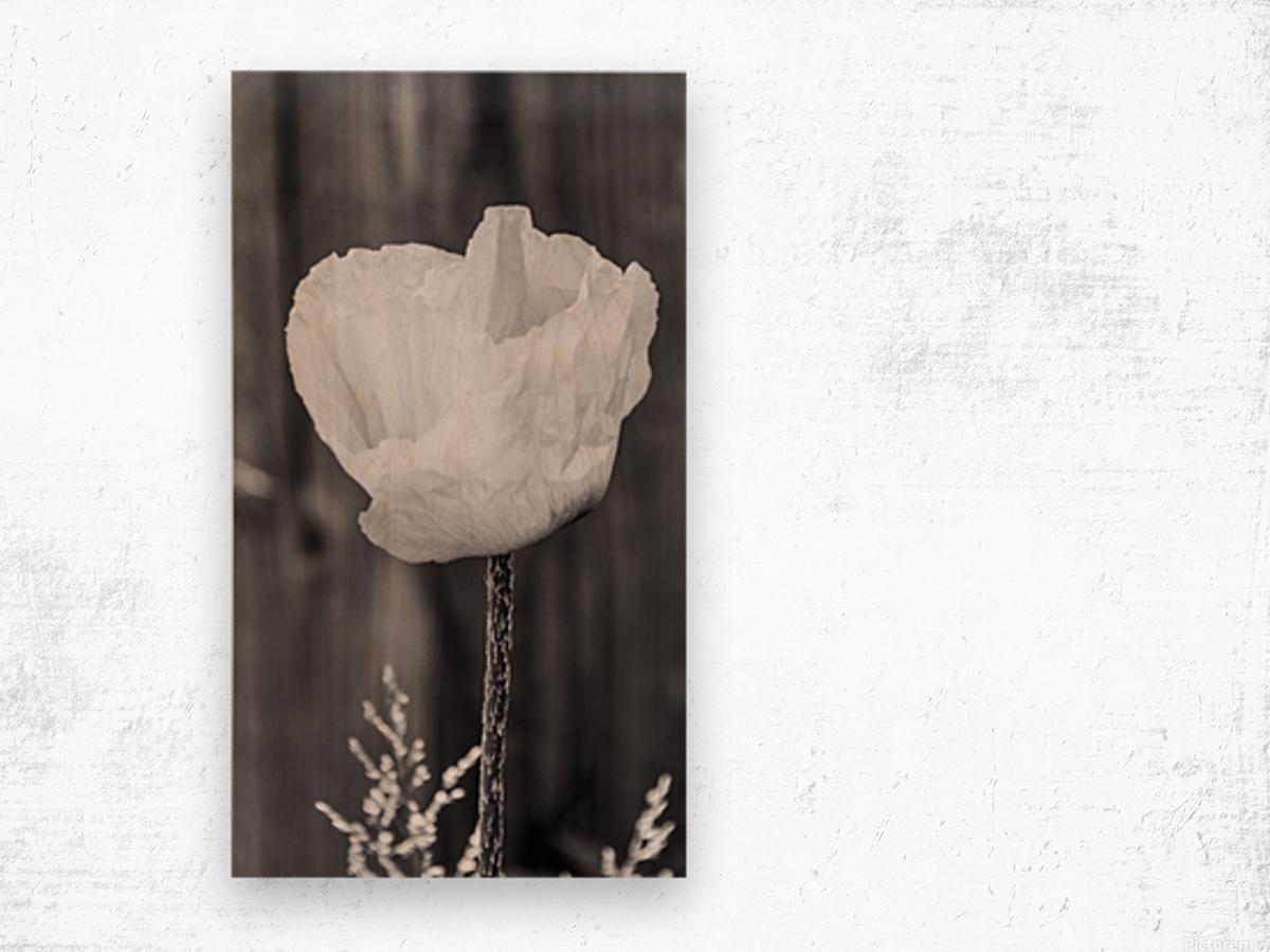 Country poppy Wood print