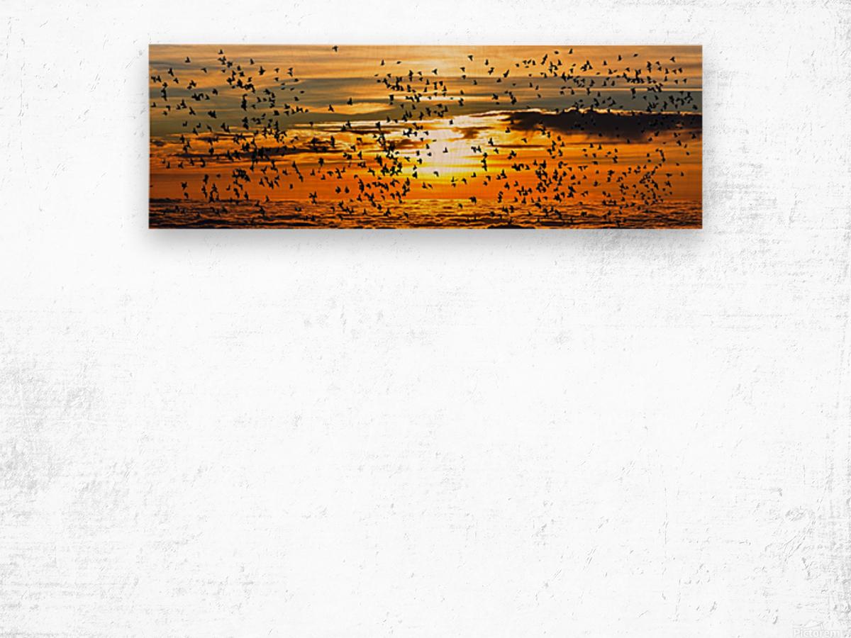 Beautiful Nature Landscape sunrise sunset sun Photography landscape photo Scenery Wood print