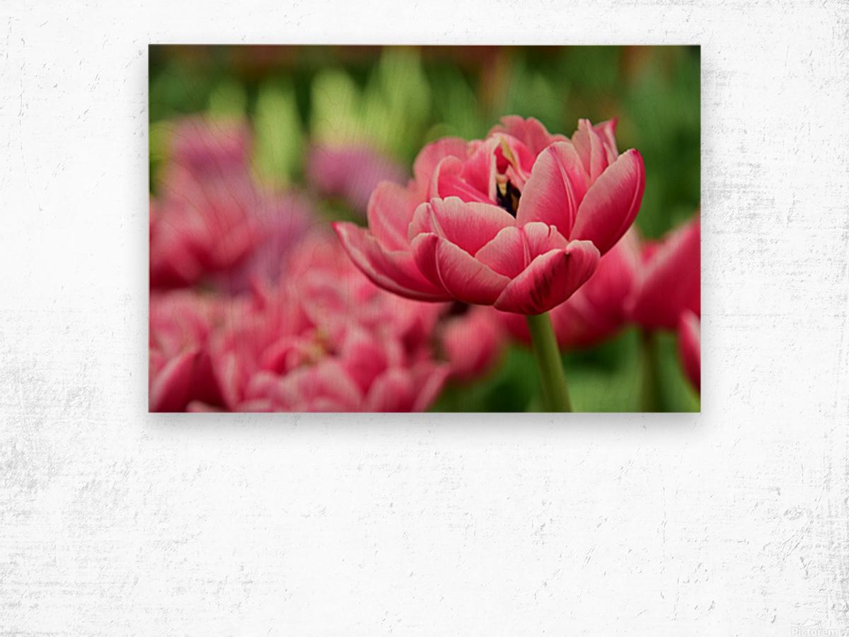 Plants - Flowers - 013 Wood print