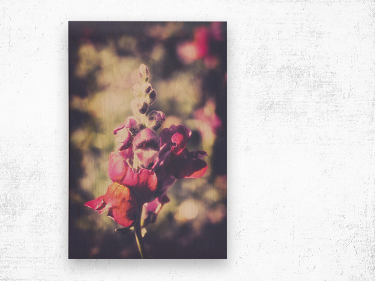 Lupine Fuchsia Wood print