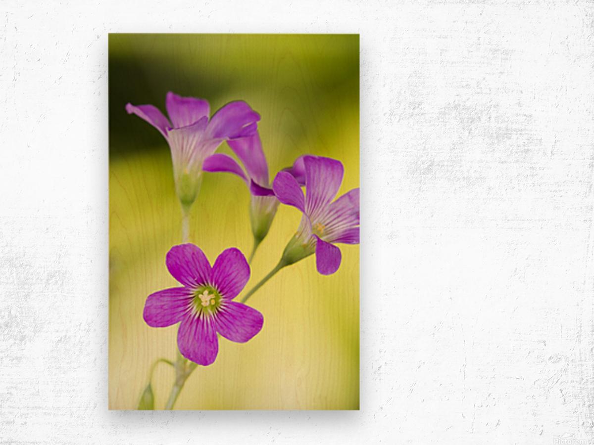 Little Pink Flowers Wood print